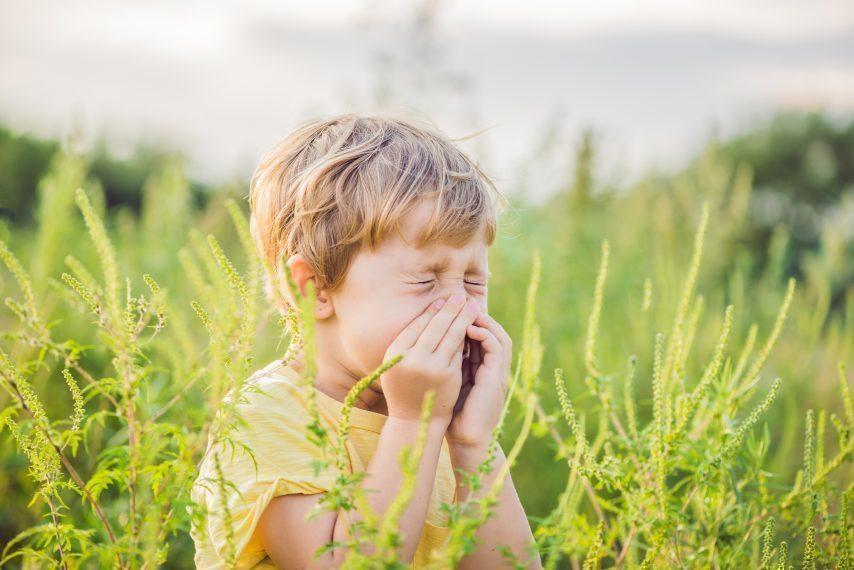 Pollen et allergies
