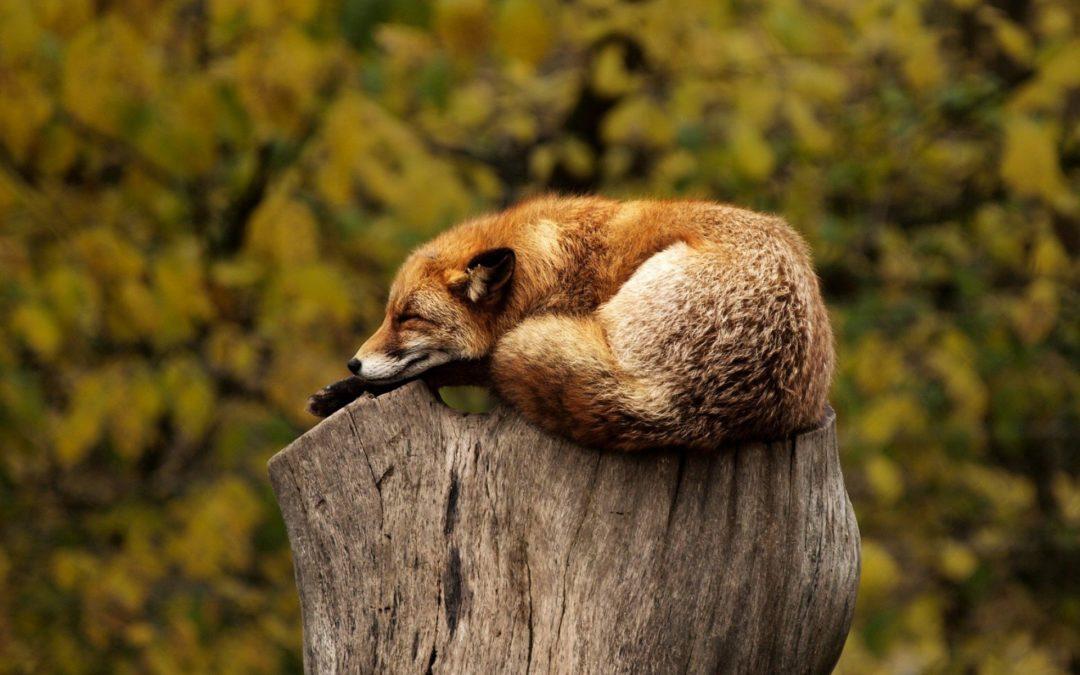 Prendre soin de son sommeil