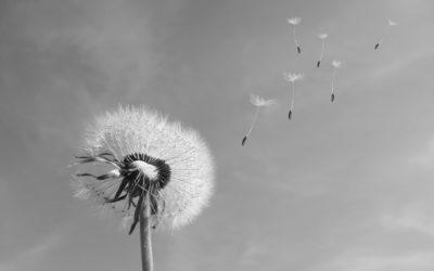Faire face aux allergies saisonnières